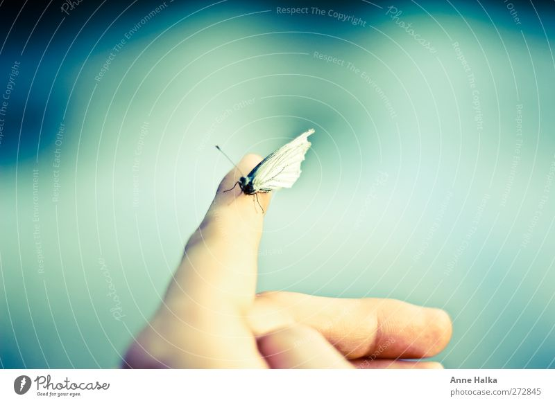 Pieris brassicae Hand Touch Smooth cabbage white Butterfly Butterflies in the stomach Feeler Fingers Captured Freedom Far-off places Longing Sit Flying Forwards