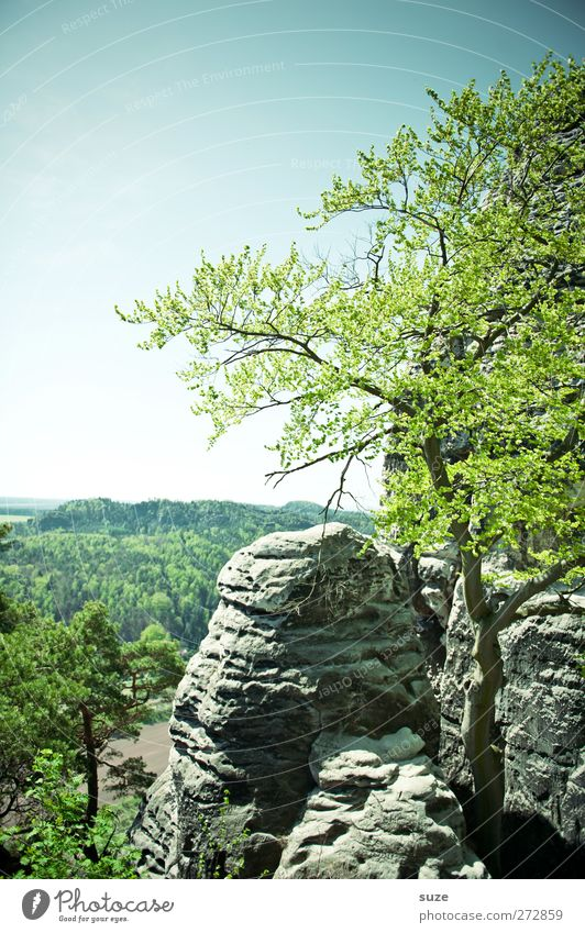Sky Nature Green Tree Plant Environment Landscape Mountain Spring Freedom Rock Climate Wild Large Tall Authentic