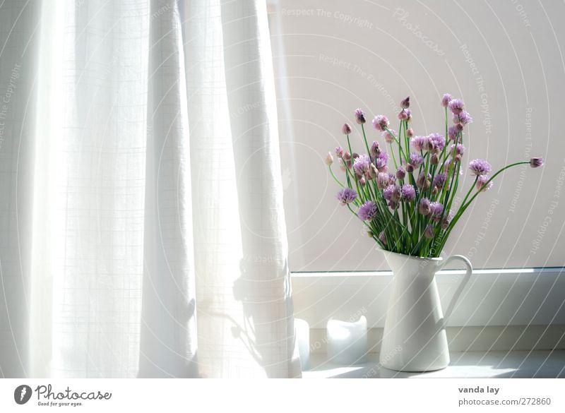 windows Interior design Decoration Chives chive blossom Bright Vase Window board Violet Blossom Drape Colour photo Interior shot Copy Space left Copy Space top