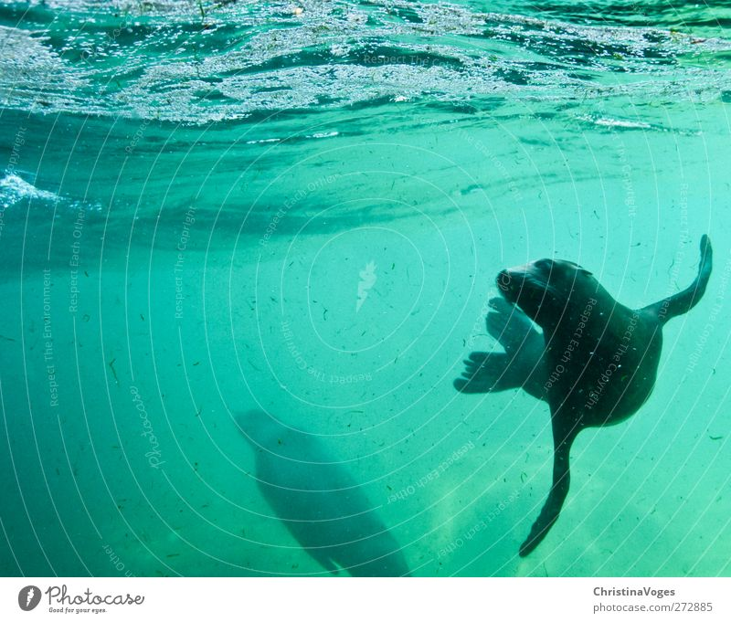 Nature Water Green Ocean Joy Animal Black Environment Happy Swimming & Bathing Waves Contentment Fresh Happiness Perspective Cute