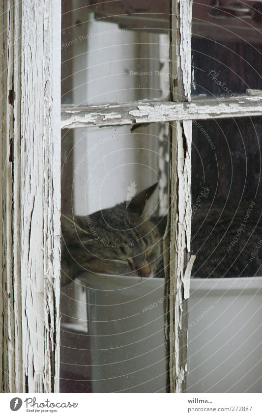 Cat Animal Dark Window Sleep Living or residing Derelict Decline Fatigue Boredom Flowerpot Window frame Window transom and mullion Window seat