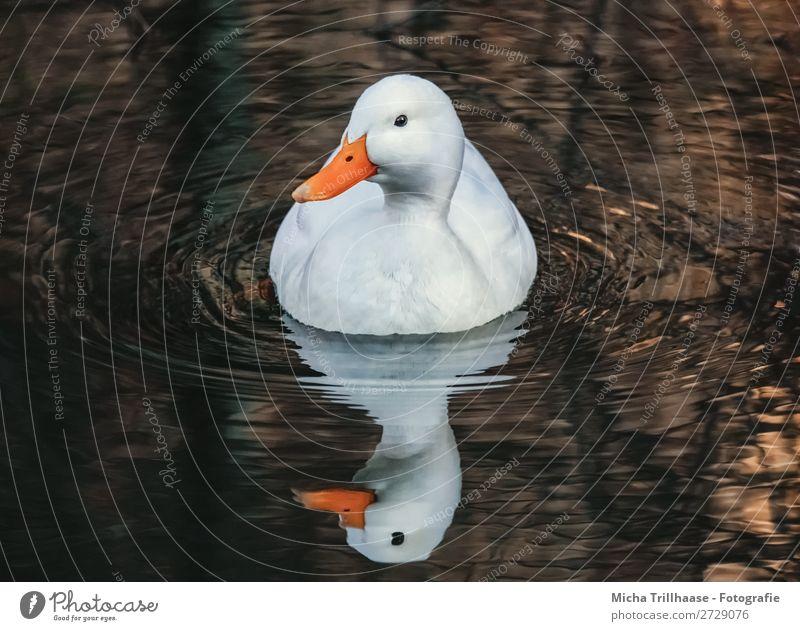 Nature Water White Animal Eyes Natural Lake Orange Bird Swimming & Bathing Brown Illuminate Gold Wild animal Feather Beautiful weather