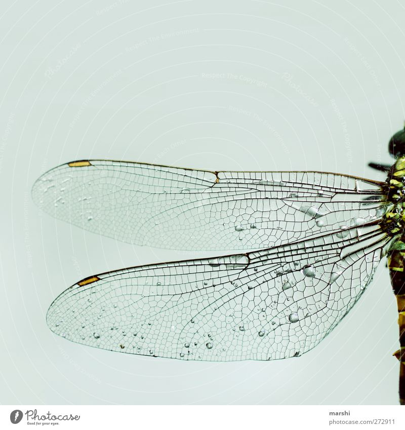 fragile Animal Dead animal 1 Bright Dragonfly Dragonfly wings Insect Half Wing Structures and shapes Colour photo Close-up Detail