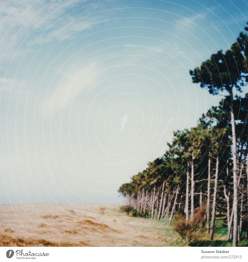 Hiddensee | __III Vacation & Travel Tourism Summer Summer vacation Sun Beach Ocean Island Sky Clouds Sunlight Spring Tree Foliage plant Forest Baltic Sea Soft