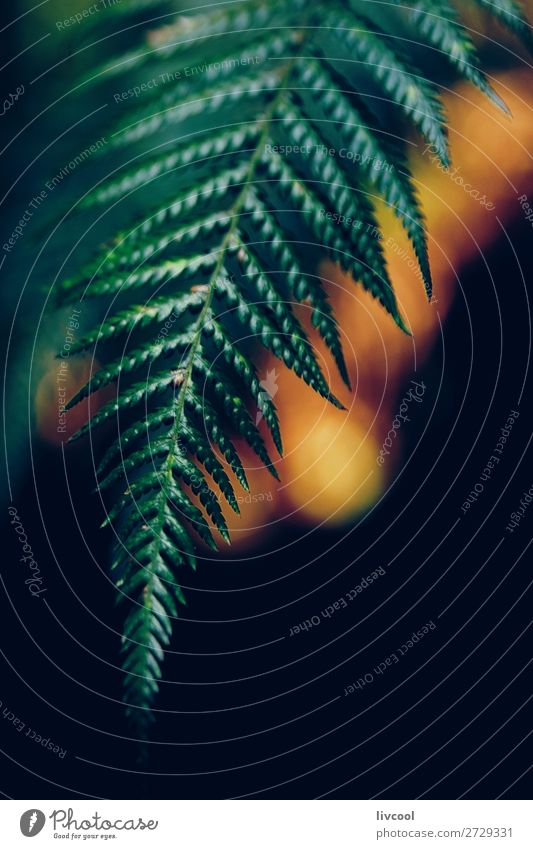 fern in the dark Life Nature Plant Forest Virgin forest Dark Wet Cute Green Colour Bud fern bud Australia + Oceania Melbourne victoria Live greeny round