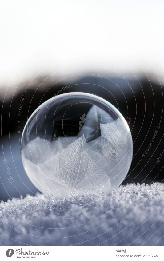 O with frost art Winter Ice Frost Snow Soap bubble Crystal structure Sphere Dark Thin Authentic Elegant Uniqueness Cold Natural Round Purity Transparent