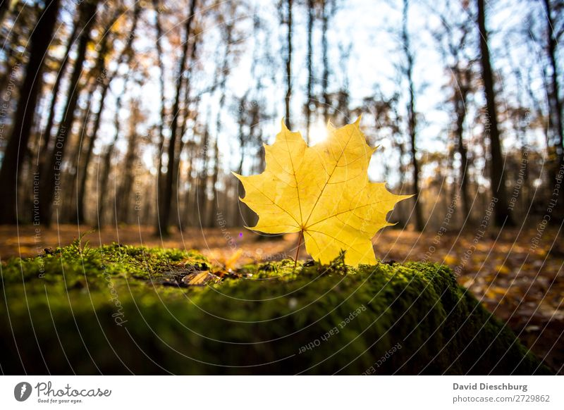autumnal Nature Cloudless sky Autumn Beautiful weather Plant Tree Forest Brown Yellow Green Orange Energy Relaxation Landscape format Leaf Woodground Colouring