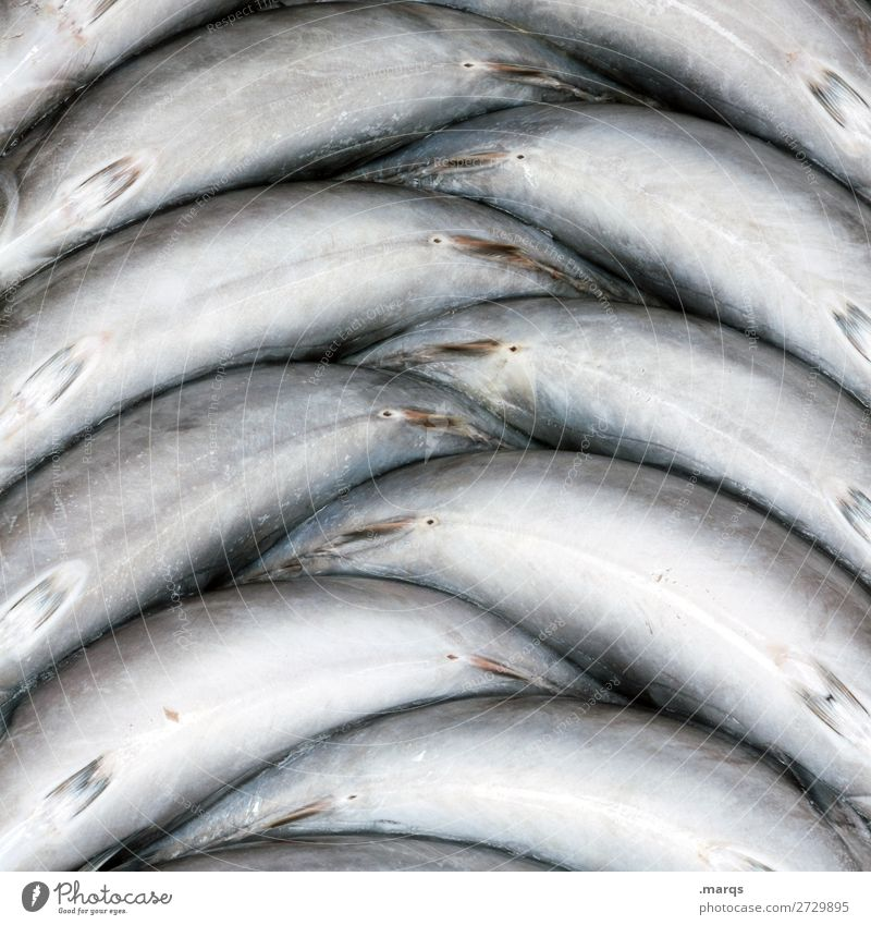 Nutrition Fresh Arrangement Fish Market stall Fish market