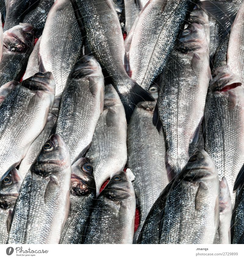Fridays gibt´s Fish Trade Fish market Markets Fresh Many Nutrition Istanbul Colour photo Exterior shot Close-up Pattern Deserted Copy Space left