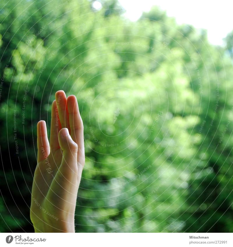 Human being Hand Green Fingers Communicate Gesture Wave