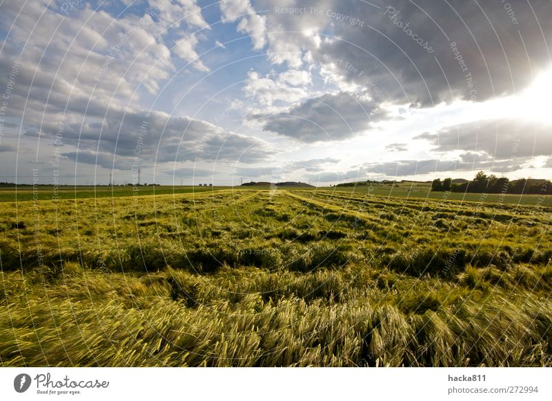 Pressed grain Food Grain Nutrition Breakfast Far-off places Freedom Thanksgiving Nature Landscape Plant Sky Clouds Sun Sunlight Summer Weather Storm Wind Field