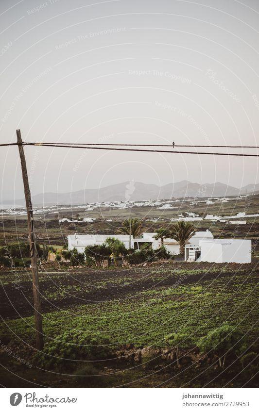 Lanzarote Vacation & Travel Environment Landscape Contentment Joie de vivre (Vitality) Calm Travel photography Canaries Electricity pylon Empty Energy Bird