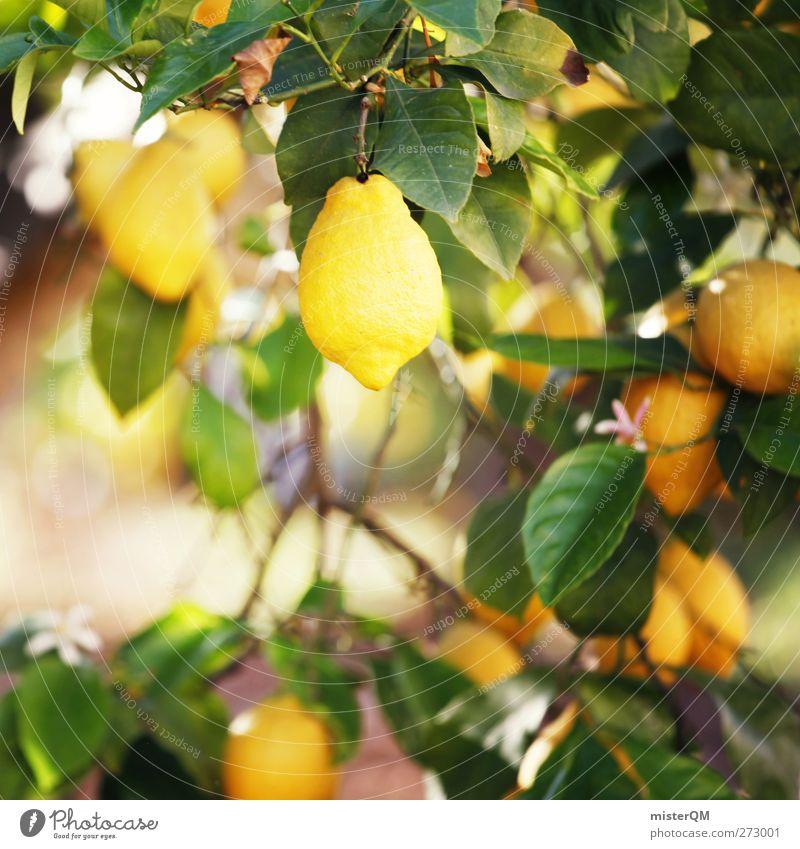 Orange Garden V Environment Nature Landscape Plant Esthetic Sour Lemon Lemon juice Lemon yellow Lemon tree Lemon leaf Yellow Growth Fruit Vitamin C Healthy