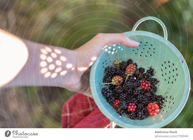 Colander with blackberries Woman Blackberry Garden Plant Nature Summer Organic Healthy
