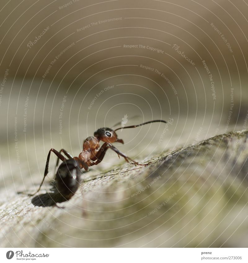 A Tit Environment Nature Animal Wild animal 1 Brown Red Waldameise Ant Insect Colour photo Exterior shot Deserted Copy Space top Day Light Shadow Sunlight