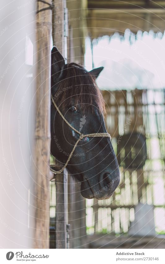 Head of horse in stable Horse Pasture Stand Stable Nature Summer Beautiful Farm Animal Beauty Photography Landscape Rural stallion equine Brown equestrian Free