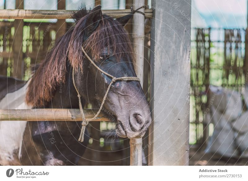 Small foal in paddock Horse Eating Paddock Foal Child Pasture Nature Summer Beautiful Farm Green Animal Beauty Photography Landscape Rural stallion equine Brown