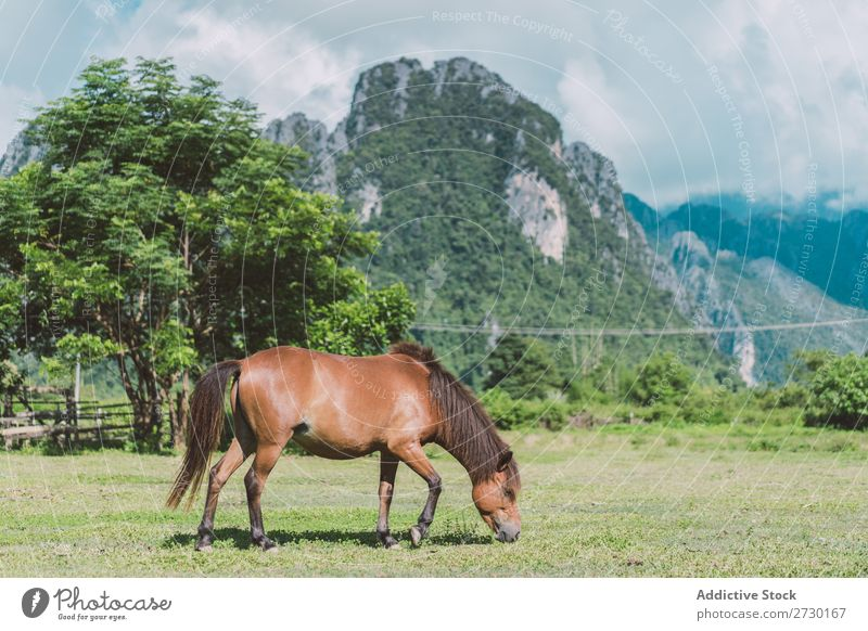 Horse pasturing on meadow Meadow Pasture Nature Summer Grass Beautiful Farm Field Green Animal Beauty Photography Landscape Rural stallion equine Brown