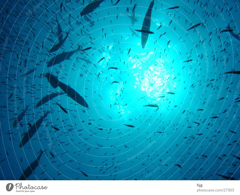 Waterview Maldives Transport fish Sun Underwater photo waterview