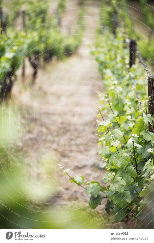 On the mountain. Environment Nature Landscape Plant Esthetic Vine Vineyard Bunch of grapes Grape harvest Wine growing Mountain Slope Green Row Beaded Saxony