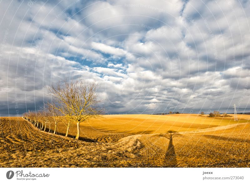 Head free Sky Clouds Horizon Autumn Weather Beautiful weather Tree Field Free Fresh Bright Blue Brown White Calm Idyll Climate Environment Far-off places