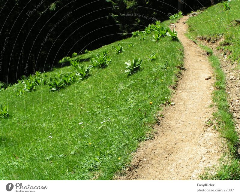 pasture path Meadow Grass Mountain Pasture Lanes & trails