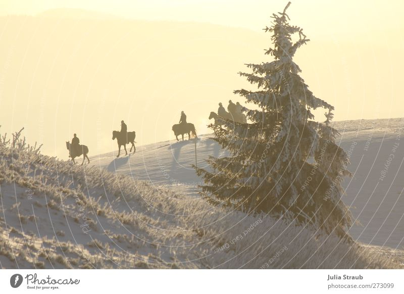 ride Human being 5 Landscape Sunlight Winter Snow Tree Mountain Farm animal Horse 4 Animal Group of animals Relaxation Ride Fir tree Colour photo Exterior shot