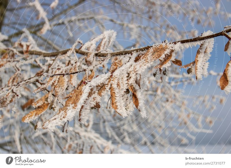 hibernation Nature Winter Ice Frost Snow Tree Leaf Forest To dry up Transience Change Ice crystal Snow crystal Cold Colour photo Exterior shot Close-up Deserted