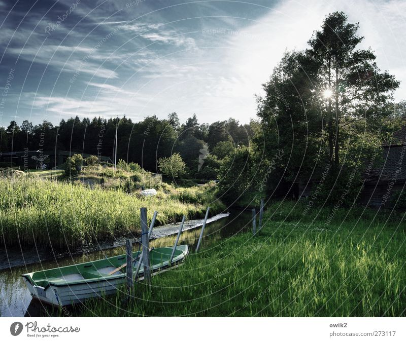 Silent days in Bohuslän Environment Nature Landscape Plant Water Sky Horizon Sun Summer Climate Weather Beautiful weather Tree Bushes Foliage plant Meadow