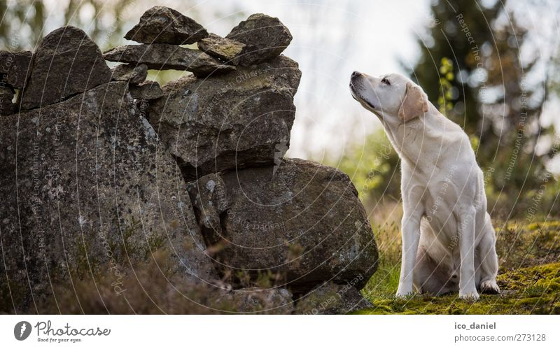 Dog Nature White Green Joy Animal Gray Stone Friendship Leisure and hobbies Free Adventure Perspective Hope Cute Curiosity