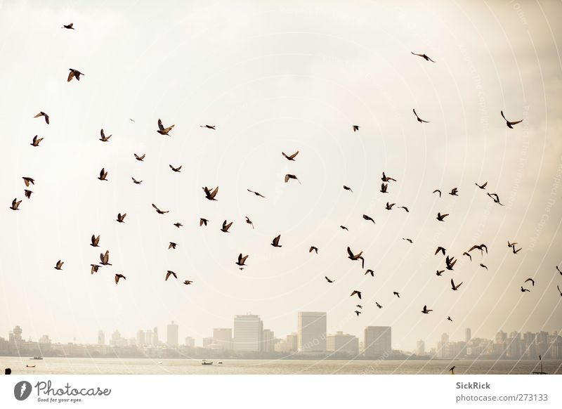 Bombay pigeons India Asia Town Port City Skyline Animal Bird Wing Flock Old Warmth Brown Yellow Gold Moody Adventure Pigeon Head Colour photo Subdued colour