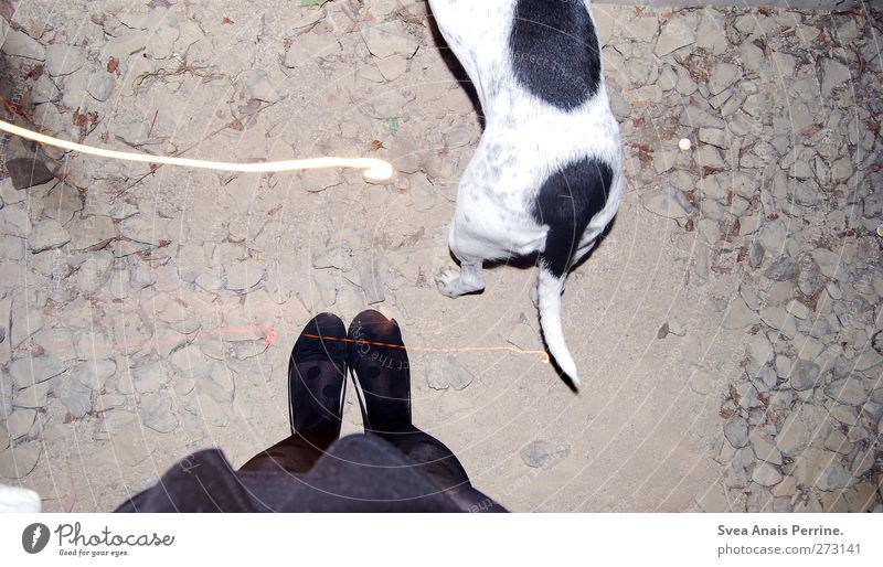 Dog Human being Youth (Young adults) Animal Adults Feminine Legs Young woman Feet Footwear 18 - 30 years Stand Asphalt Thin Skirt Pet