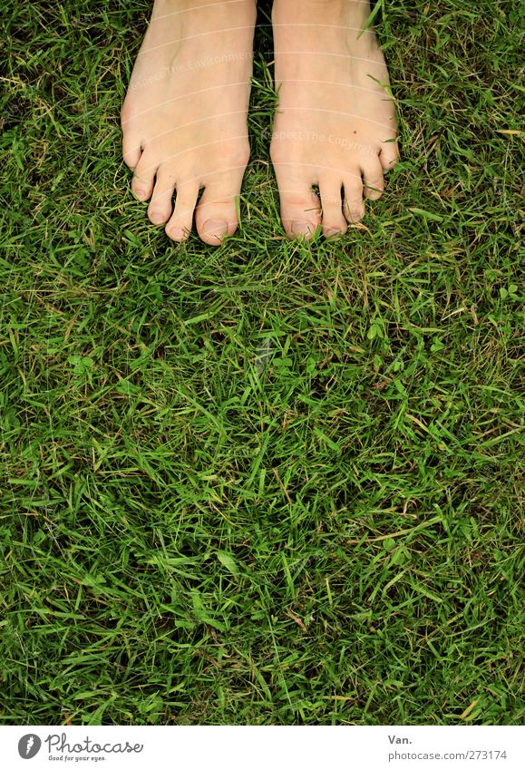 barefoot Human being Feminine Feet Toes 1 18 - 30 years Youth (Young adults) Adults Nature Animal Spring Plant Grass Meadow Stand Fresh Green Barefoot