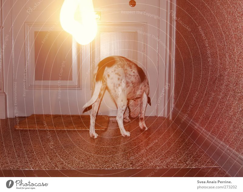 <3 <3 <3 Staircase (Hallway) Pet Front door Doormat Animal Dog 1 Stand Trashy Night Light Visual spectacle Light (Natural Phenomenon) Long exposure Boxer