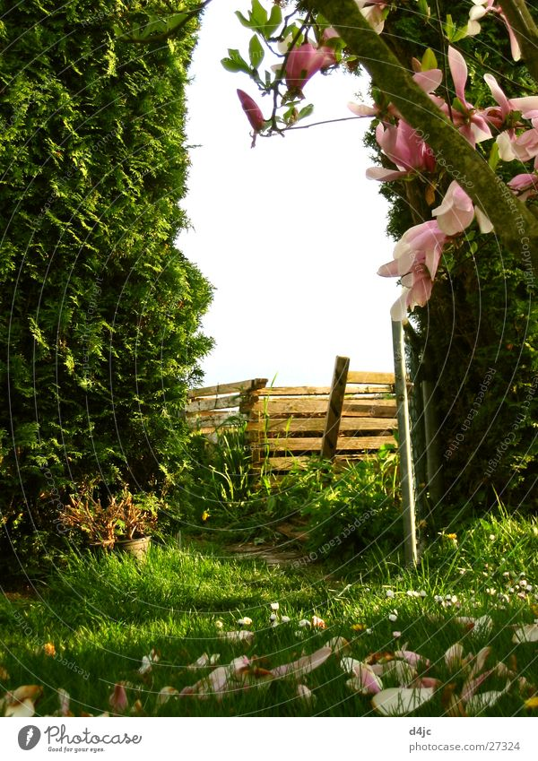 garden gate Hedge Tree Meadow Archway Garden door Gate
