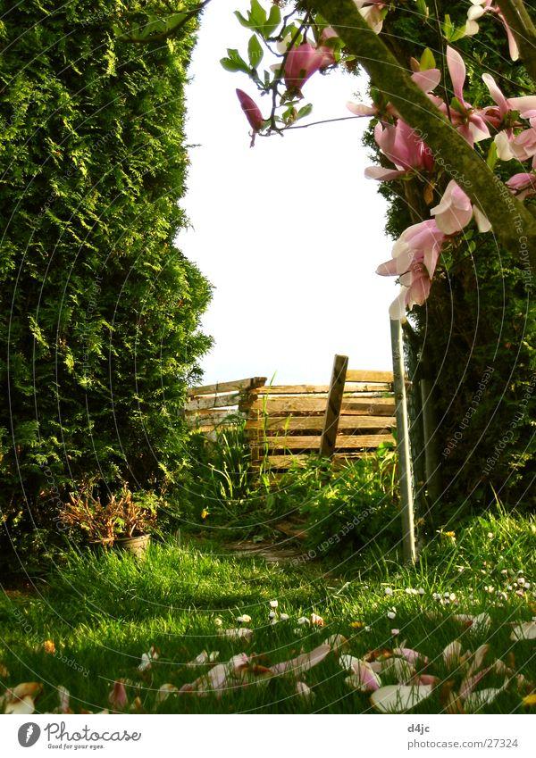 Tree Meadow Garden Gate Hedge Archway Garden door