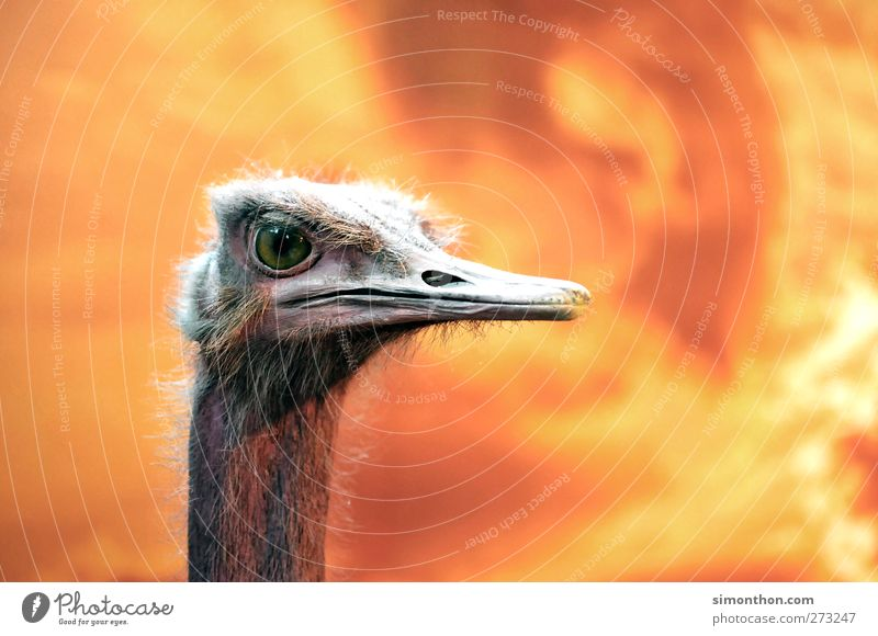 Nature Animal Baby animal Bird Background picture Wild Natural Blaze Fire Feather Animal face Africa Zoo Museum Animalistic Beak