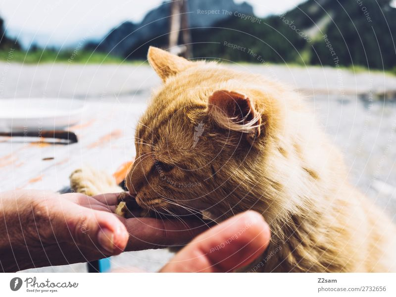 Cat eats out of hand Hiking Hand Nature Landscape To feed Feeding Friendliness Cuddly Cute Beautiful Happy Safety (feeling of) Goodness Altruism Calm Appetite