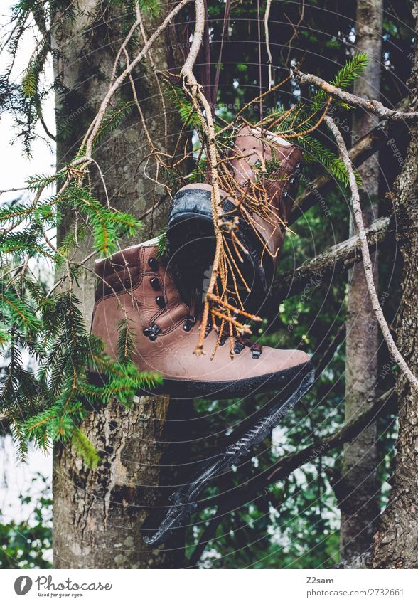 hiking boots Leisure and hobbies Hiking Environment Nature Landscape Autumn Plant Tree Footwear Boots Hang Old Broken Natural Diligent Indifferent Adventure