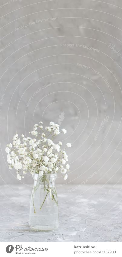 Bouquet of small white flowers in a jar Woman Beautiful White Flower Adults Blossom Small Copy Space Gray Decoration Wedding Bottle Rustic Valentine's Day