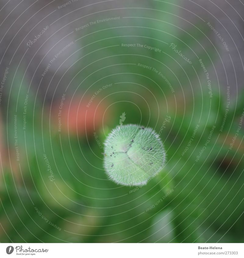 Nature Green Plant Flower - a Royalty Free Stock Photo from Photocase