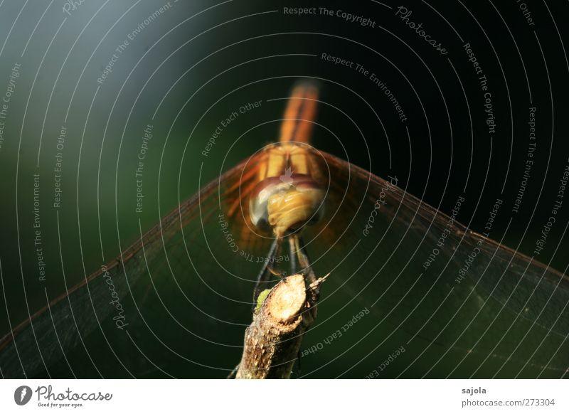 Noooooooooo! Animal Wild animal Insect Dragonfly 1 Looking Sit Wait Shake of the head Movement negate Colour photo Exterior shot Close-up