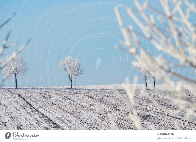 Snow-covered trees on a field Nature Landscape Sky Cloudless sky Winter Beautiful weather Field Free Fresh Bright chill natural already Blue White Contentment