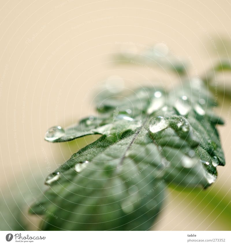 Nature Water Green Plant Summer Leaf Calm Environment Spring Glittering Wet Growth Fresh Illuminate Drops of water Elements