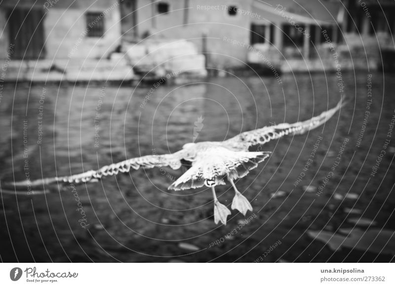 Mine Mine Mine Water Waves Ocean Town Harbour Animal Wild animal Bird Wing Seagull Feather 1 Flying Exterior shot Deserted Day Shallow depth of field