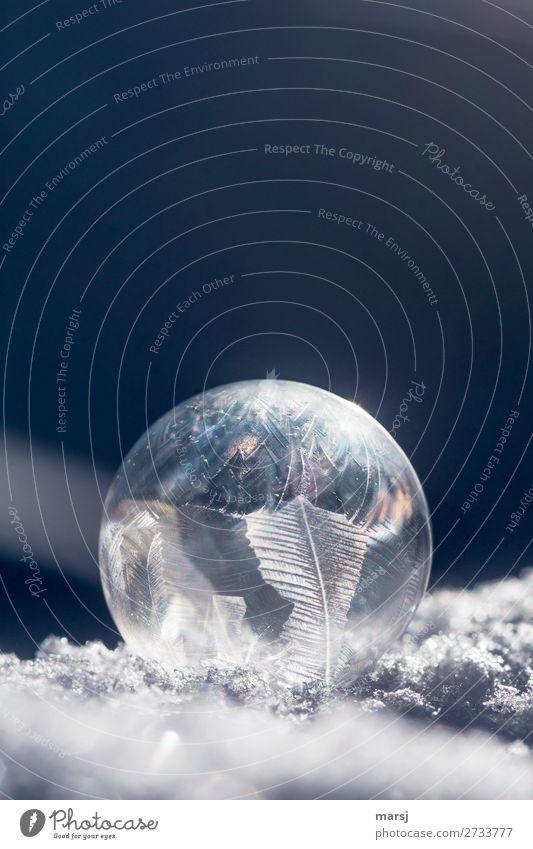 O Nature Winter Ice Frost Soap bubble Crystal structure Sphere Spherical Illuminate Thin Authentic Fantastic Uniqueness Cold Elegant Complex Clarity Snow