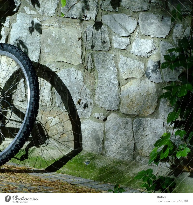 Plant Leaf Calm Relaxation Wall (building) Wall (barrier) Stone Metal Bicycle Leisure and hobbies Break Vine Plastic Fitness Athletic Cycling