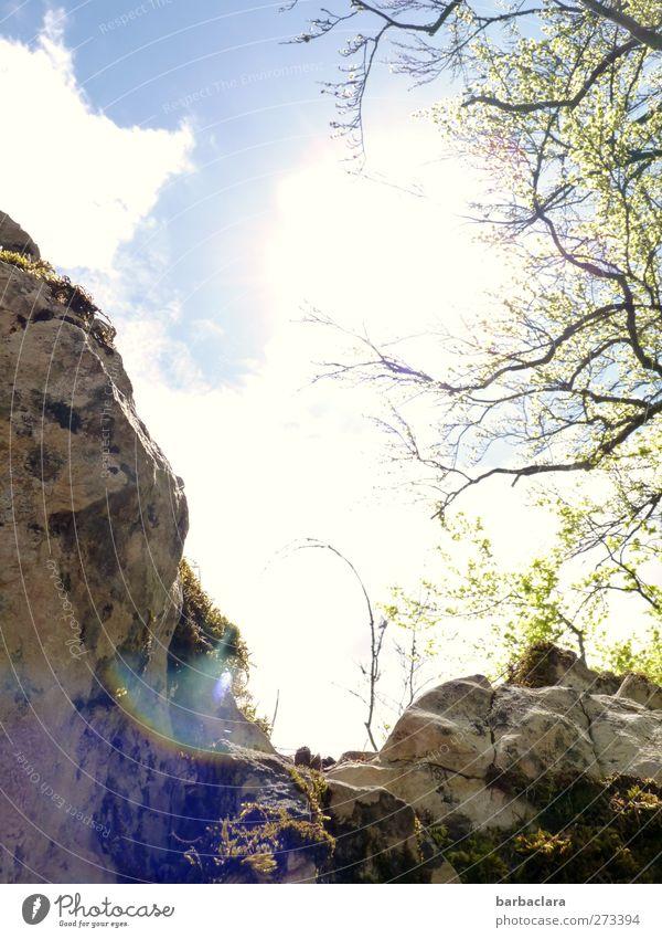 at a lofty height Landscape Air Sky Sun Tree Bushes Rock Mountain Swabian Jura To enjoy Hiking Free Bright Above Wild Joy Enthusiasm Determination Effort Nature