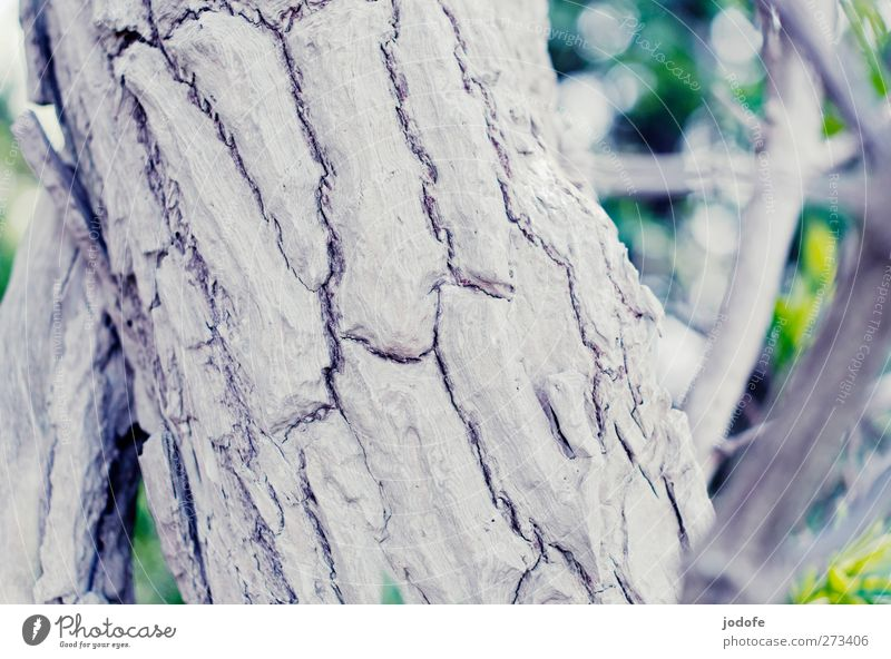 Nature Old White Tree Plant Environment Death Branch Tree trunk Crack & Rip & Tear Tree bark Cork Log