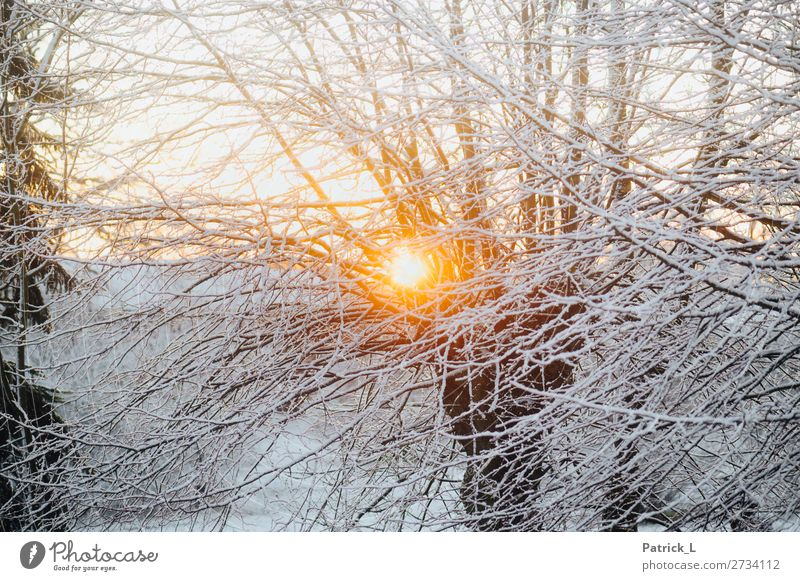 Vacation & Travel Nature Beautiful White Tree Calm Forest Winter Yellow Environment Cold Snow Snowfall Contentment Ice Gold